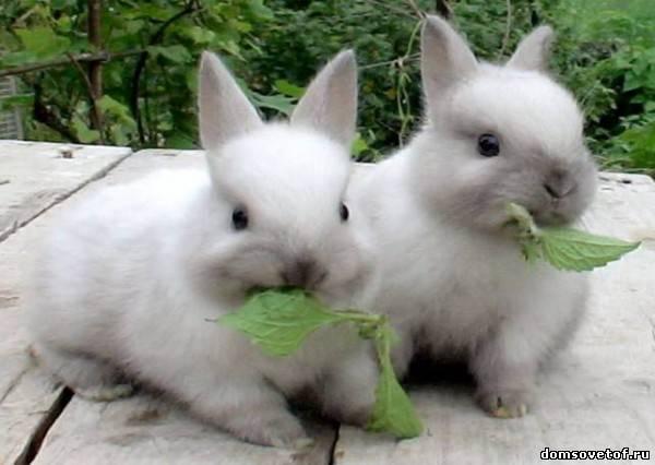 By L . V. Зверьё.  Категории: Кролики.