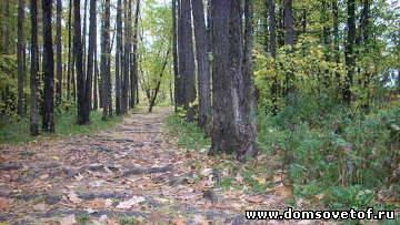 кто защитить Химкинский лес