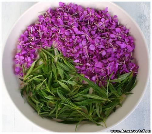 иван чай, цветки и листья иван-чая