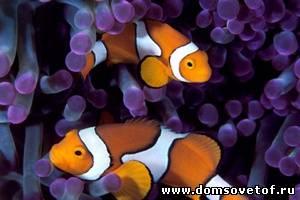 Подводная фотосъемка, как фотографировать под водой