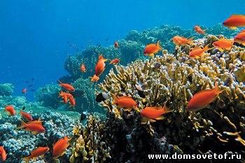 Подводная фотография. Как снимать под водой?