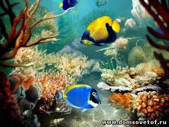 аксессуары для подводной фотографии