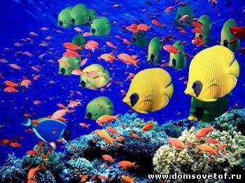 подвдная фотосьемка, как фотографировать под водой
