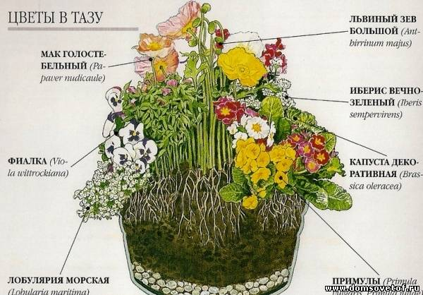 Схема Цветочной композиции в