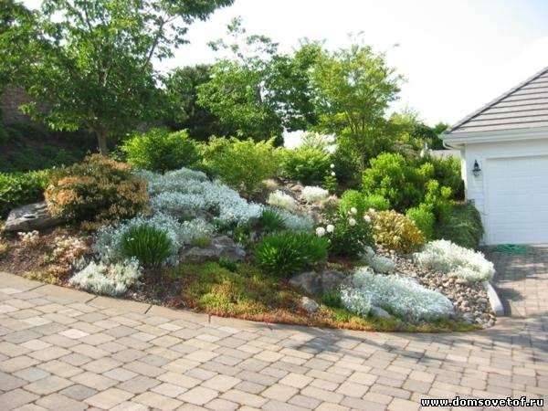 Контрастная листва в саду, как основа ландшафтного дизайна