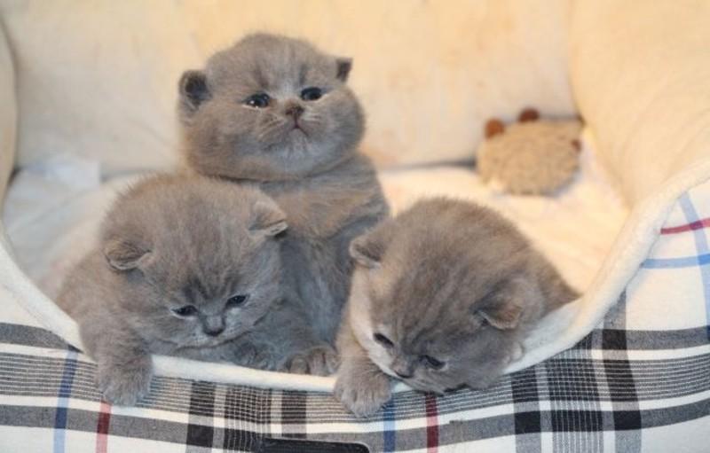 если в доме живет кошка