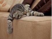как сохранить чистоту в доме, если у вас живет кошка