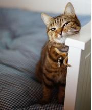 кошка в доме, как сохранить порядок
