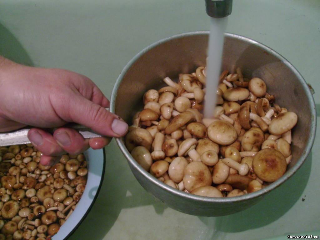 Фото.Как мариновать грибы опята. Рецепт маринования опят в картинках