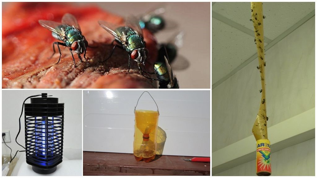 Как уничтожить мух
