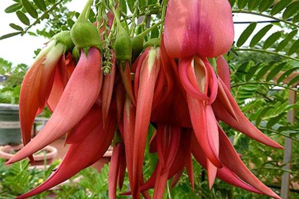 картинки редких цветов:
